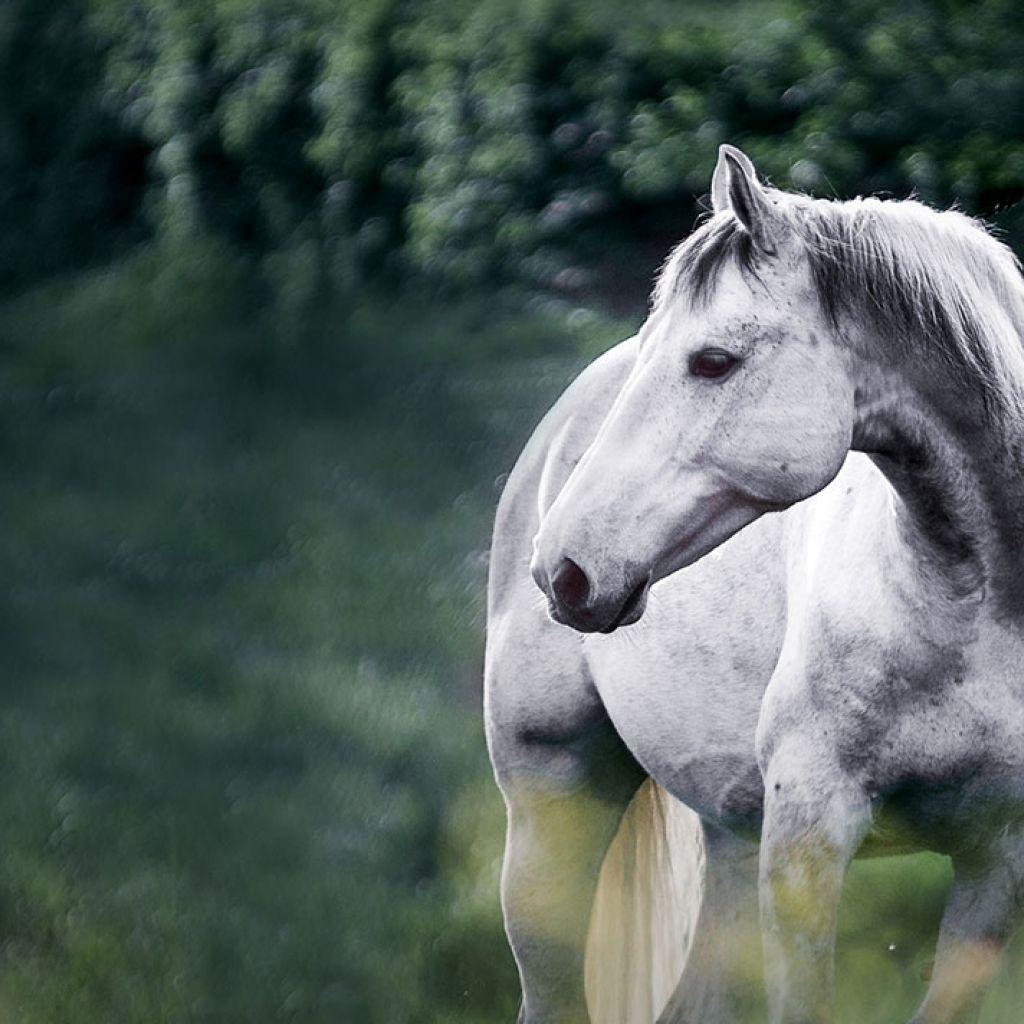 Stärken mit Pferden